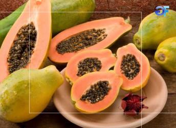 2-Mamão-papaia-benefícios-e-propriedades